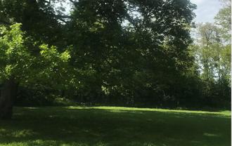 Forêt de Clamart pour le stage de yoga